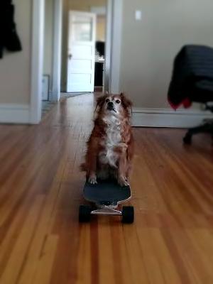 Nilla on Skateboard